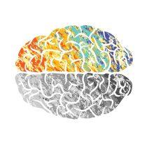 brain coloured 2